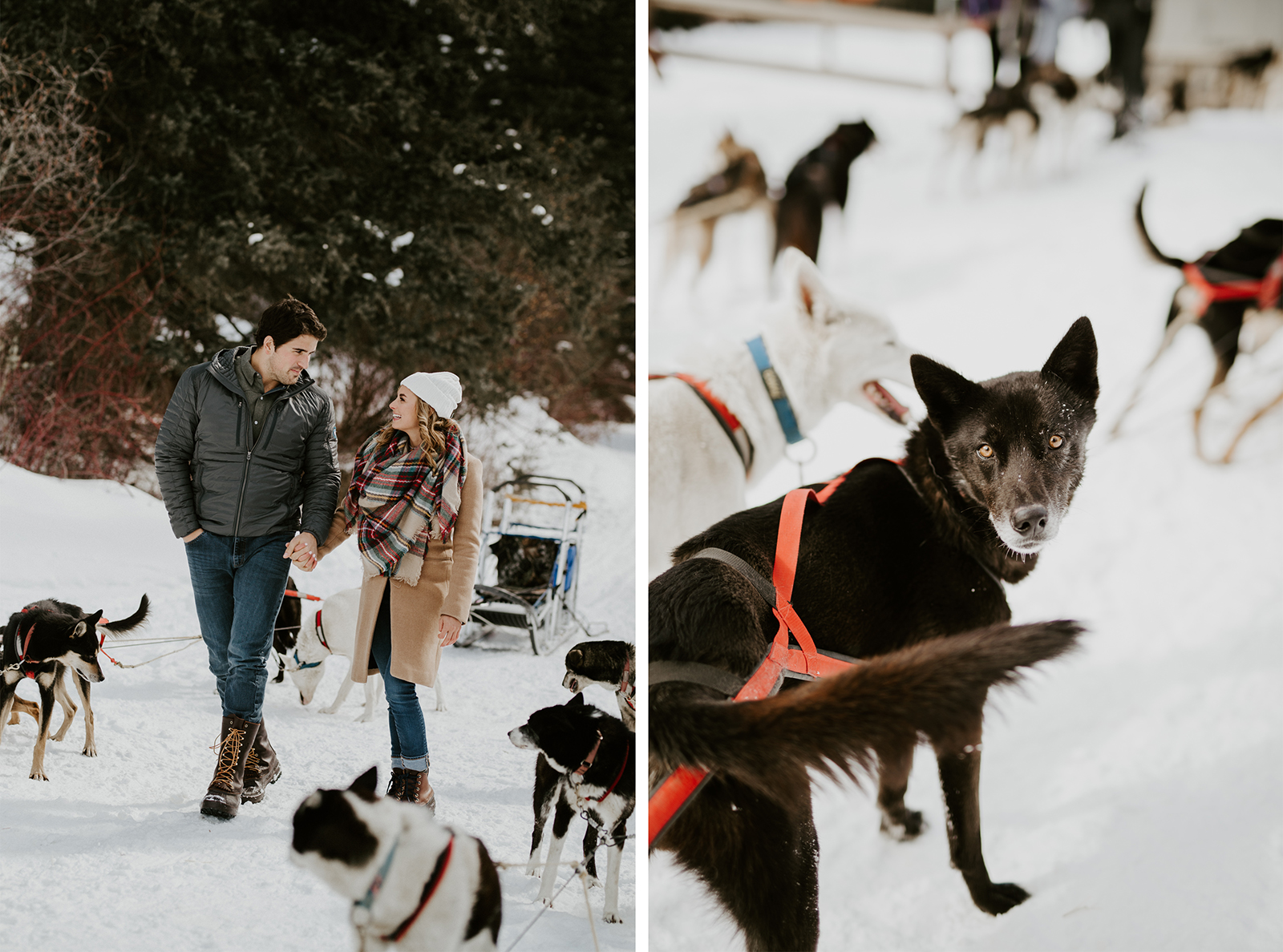 chico dogsledding